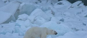 Save the polar bears: use Russian gas
