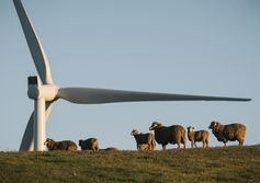 Wind farm taps analytics