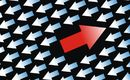 Executive outcomes: Flow Power