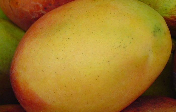 Mangoes bear sweet solution to oil contamination