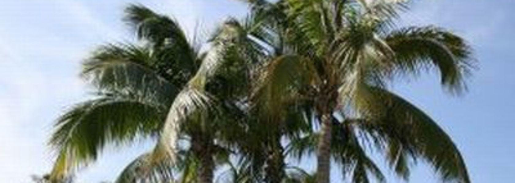 dating sites voor Pacific Islanders Dating County Down