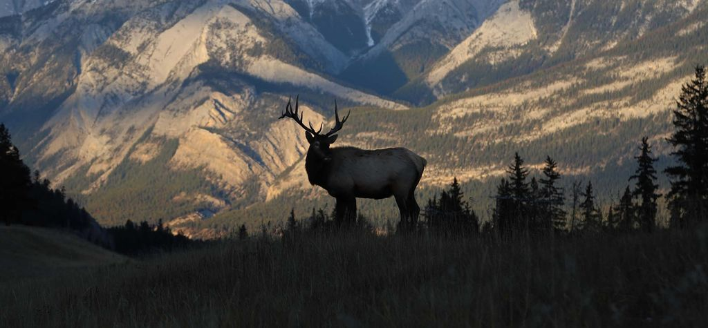 ENB Briefs: RBC drops Elk, Galilee Deeps Albany-2 wellsite, and more