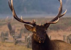 Elk within guidance after eventful year