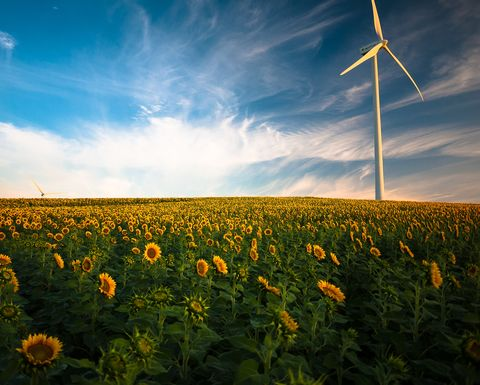 Public perception of renewables changing: Ipos poll