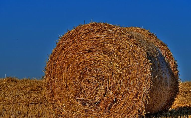 Danes back a plant fuelled with straw